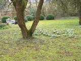 Březen 2020 zahrada u domu pana řídícího A_ Bocha.